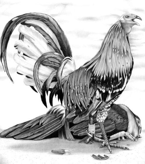 Gamecock Tattoo Designs
