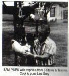 Sam Yurk